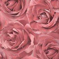 roza-pink